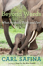 Beyond words : what animals think and feel