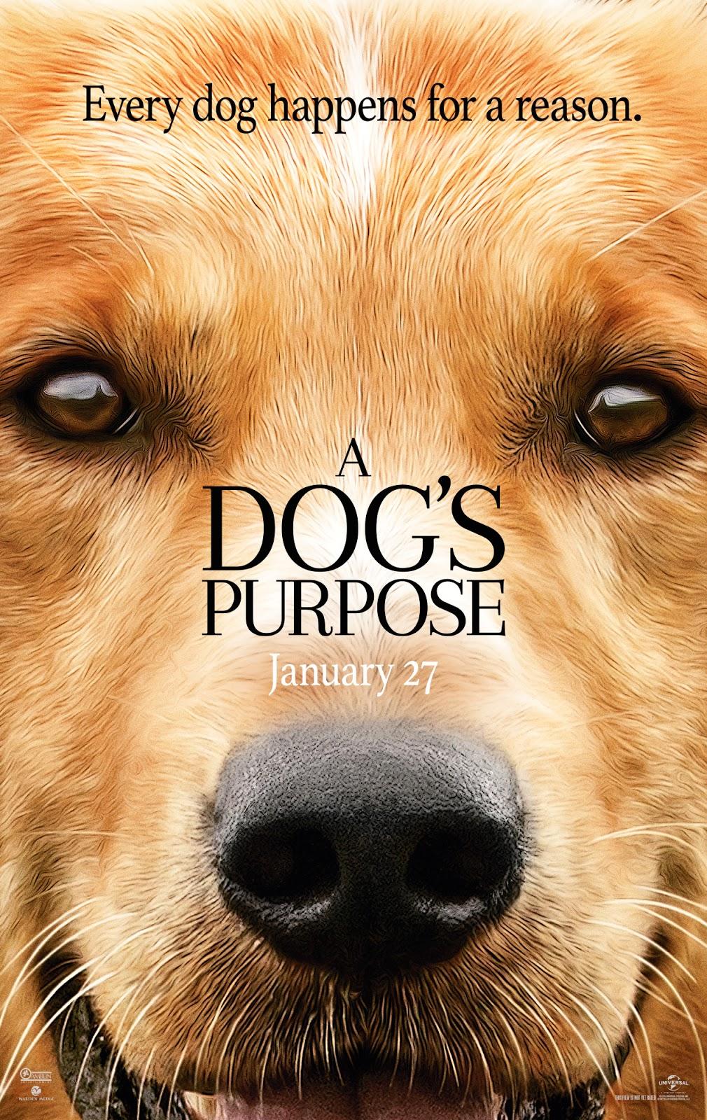 為了與你相遇[保護級:文學改編] : A dog
